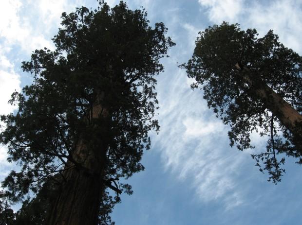 Sequoia-National-Park-California